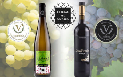 Viñagamo Blanco Joven 2018 obtiene la medalla Great Golden, máxima distinción del prestigioso concurso International Awards Virtus de Lisboa